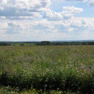 Super-Pasture